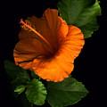 Outrageous Orange by Deborah J Humphries