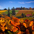 Over The Durant Vineyards by Marvin Mast