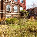 Overgrown Fall Garden by Jannis Werner