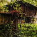 Overgrown by Marnie Patchett