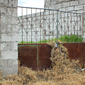 Overgrown Rusted Gate by Robert Hamm