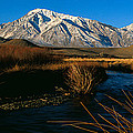 Owens River Valley Bishop Ca by Panoramic Images