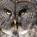 Owl 6 by Peter Olsen