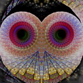 Owl Abstract by James Smullins