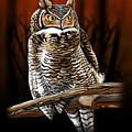 Night Owl by Andrew Ellis