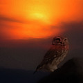 Owl At Sunset by Cliff Norton