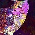 Owl Bird White Raptor  by PixBreak Art