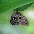 Owl Butterfly Hanging by Bonnie Follett