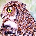 Owl by Carol Blackhurst