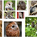 Owl Collage by Jill Lang