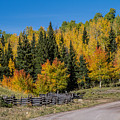 Owl Creek Pass Road 2 by Alana Thrower
