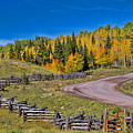 Owl Creek Pass Road by Alana Thrower
