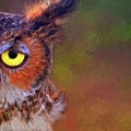 Owl Eyed by Alice Gipson