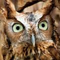 Owl Eyes by Jill Lang