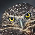 Owl Face To Face by Douglas Barnett