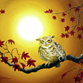 Owl In Autumn Glow by Laura Iverson