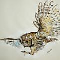 Owl In Flight by Alan Pickersgill