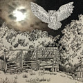 Owl In The Moonlight On Brush Mountain by Judy Hatlen