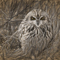 Owl In The Woods by Patti Parish