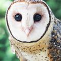 Owl Insight by Jodie Nash