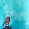 Owl by Joel Tesch