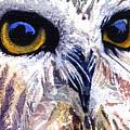 Owl by John D Benson