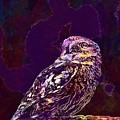 Owl Little Owl Bird Animal  by PixBreak Art