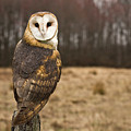 Owl Looking At Camera by Jody Trappe Photography