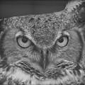 Owl Love  by Sheryl Mayhew