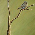 Owl On A Branch by Cami Lee