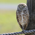 Owl On A Rope by Keith Lovejoy
