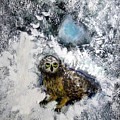 Owl On Snowy Afternoon by Michela Akers