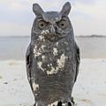 Owl On The Beach by Edward Fielding