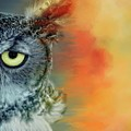 Owl Oranges by Alice Gipson
