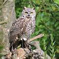 Owl by Pamela Campbell
