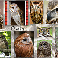 Owl Photomontage by Jill Lang