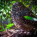 Owl by Sarah Sage