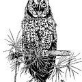 owl by Stephen Taylor