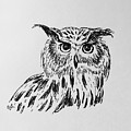 Owl Study 2 by Victoria Lakes