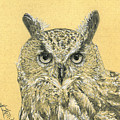 Owl Study by Kristy Holliday Main