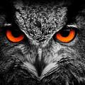 owl by Travis Simpler