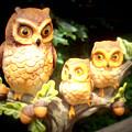 Owl Trio by Jennifer Coleman