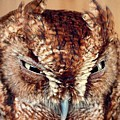 Owl Who? -brown Owl by Adrian DeLeon