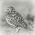 Owl Yellow Eyes by Edward Fielding