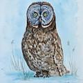 Owl by Yuliya Schuster