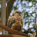 Owlet Lookout by Craig Corwin