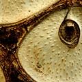 Owl's Eye by Catherine Turner