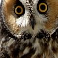 Owl's Eyes by Larry Allan