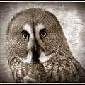 Owls Eyes -vintage Series by Grace Iradian