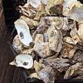 Oyster Shells by Art Block Collections